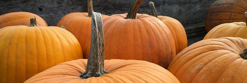 Pumpkin Patch in Jasper, Alabama